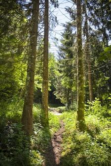 フランス、モンタンジュの晴れた日の森の魅惑的な景色