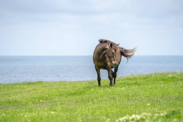 緑の牧草地の海の近くの野生の馬の魅惑的な景色