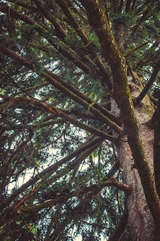 푸른 하늘을 배경으로 두꺼운 나무 가지의 매혹적인 전망