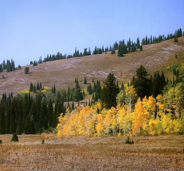 가을 언덕 근처의 다채로운 나무의 매혹적인 전망