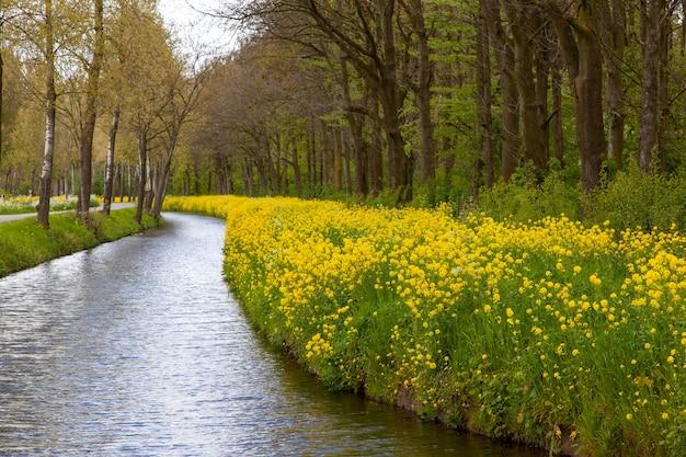 네덜란드 시골의 노란 꽃과 나무로 둘러싸인 강의 매혹적인 전망