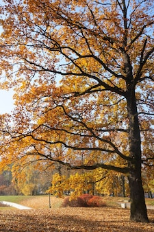 공원에서 노란 잎으로 키가 큰 나무의 매혹적인 전망