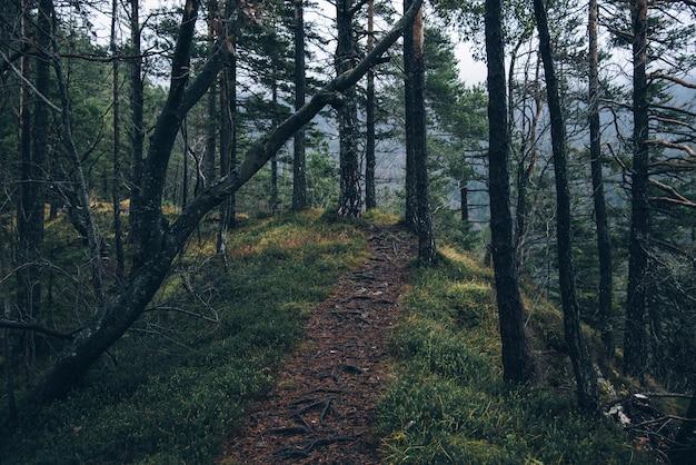 Vista affascinante del sentiero attraverso il bosco con alberi ad alto fusto