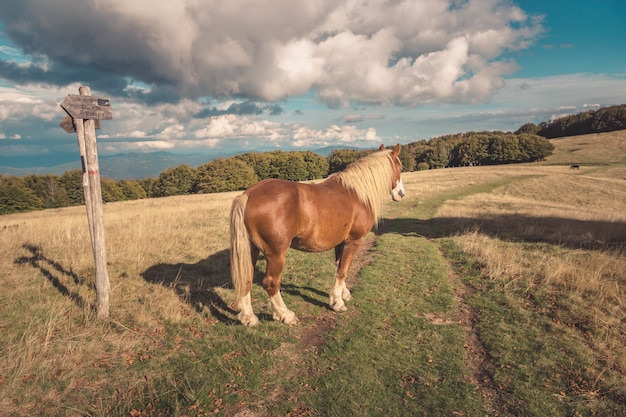 Mesmerizing view of a wild horse in the meadow