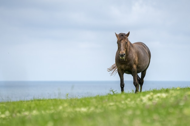 Mesmerizing view of a wild horse near the sea on a green meadow