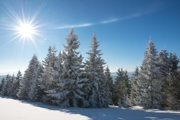 雪の斜面と青空と白い雲に向かって成長する木々が晴れた凍るような冬の日に魅惑的な冬の風景