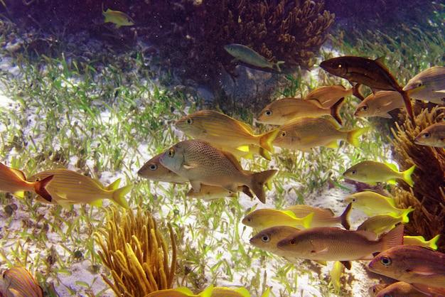 Mesoamerican barrier great mayan reef