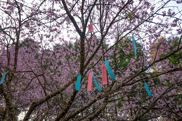 Message on brazilian festa da cerejeira