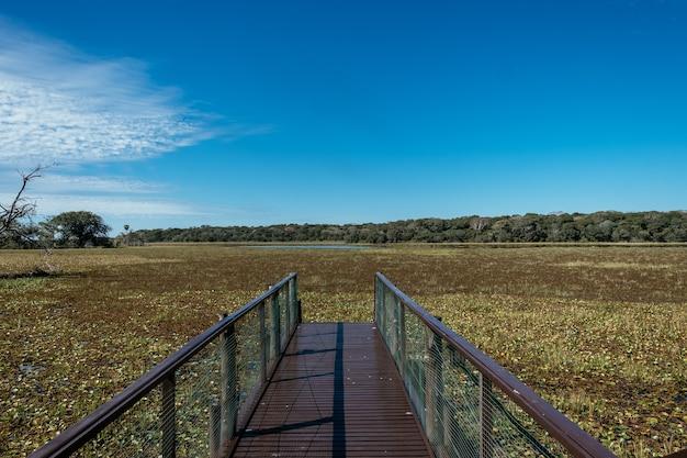 美しい緑に囲まれた汚れた沼の近くの金属橋