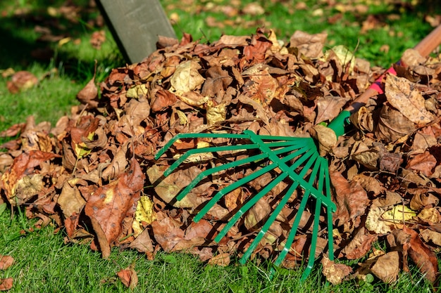 A metal green fan rake lies, handle up, on a heap with crumbling autumn leaves.