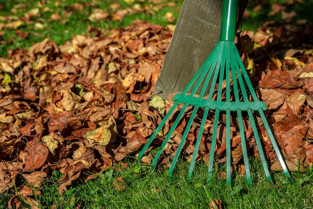 A metal green fan rake stands by a wooden post, and autumn leaves are scattered around on a lawn with green grass.