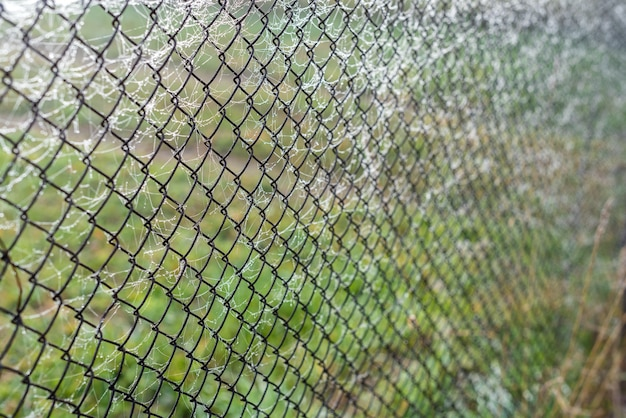 Metal mesh fence in the web in the morning