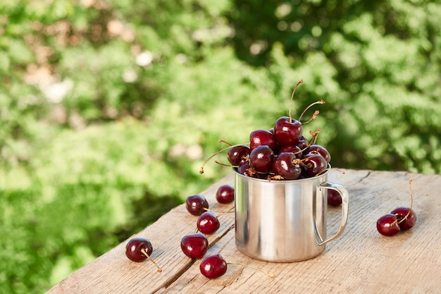 Metal mug with ripe red cherry on a green background of foliage. summer sunny still life with ripe cherry berries