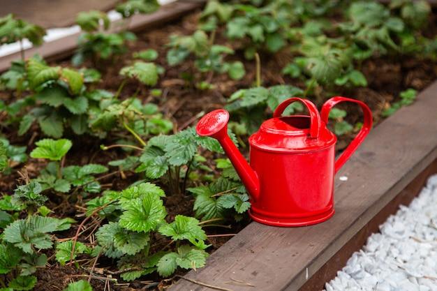 Металлическая лейка на огороде с выращиванием овощей