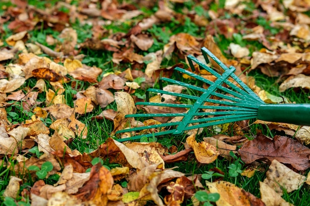A metallic green fan rake lies on a lawn with green grass strewn with yellowed and withered autumn leaves.
