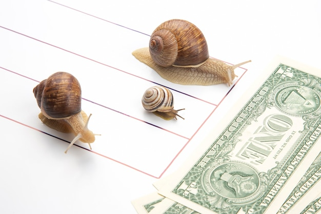 Metaphor for achieving financial success in business. snails run on a running track for wealth. perseverance in work and time to win. business competition display concept