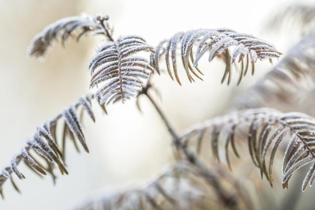 凍った霜で飾られたメタセコイア