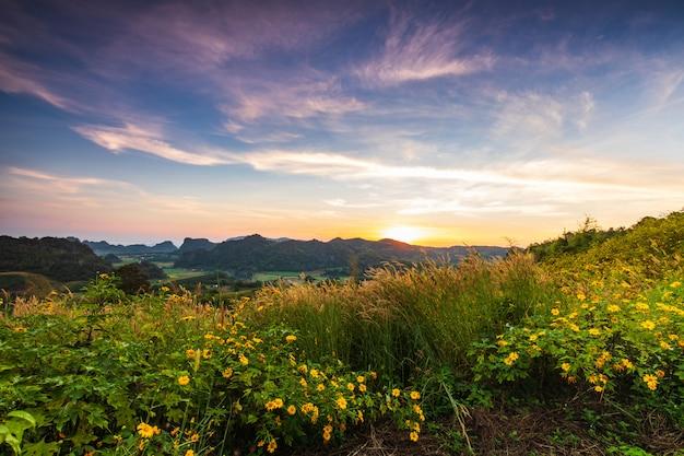 Mexican sunflower, beautiful flower on  phu-pa-pao, loei province, thailand.