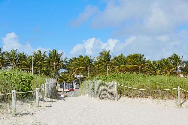 Miami beach entrance with palm trees florida us