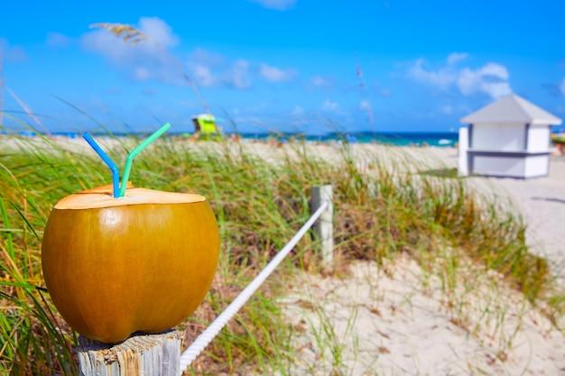 Miami south beach 2 straws coconut florida