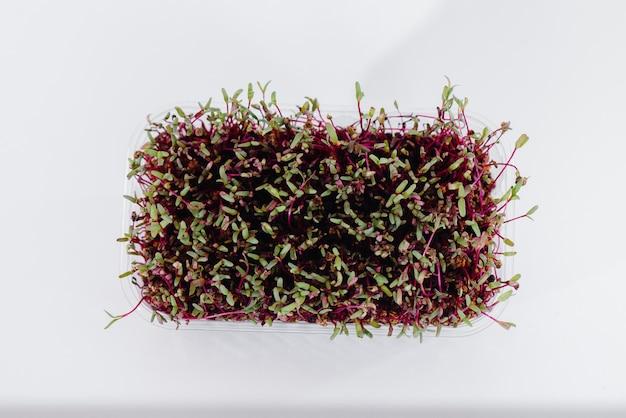土で鍋に白いテーブルにマイクログリーンビートもやし。健康食品とライフスタイル。