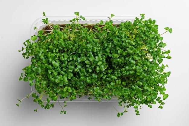 Микро зеленые растущие ростки на белом фоне, вид сверху