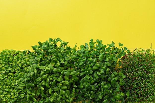 Микро зеленые растущие ростки на желтом фоне, вид сверху