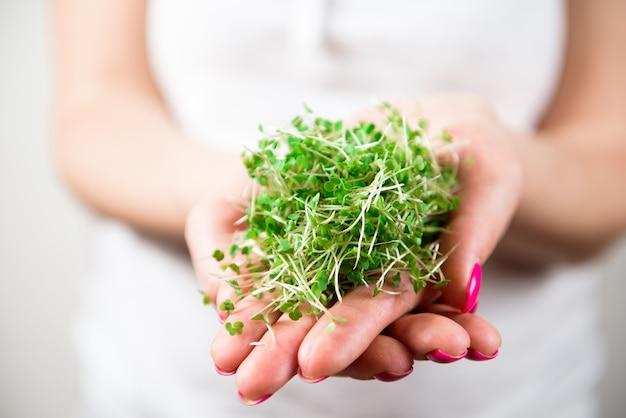 マイクログリーンの健康食品とグリーングラス。マイクログリーンの発芽。