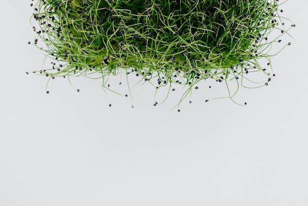 Ростки микро-зеленого лука крупным планом на белой поверхности в горшке с почвой. здоровое питание и образ жизни.