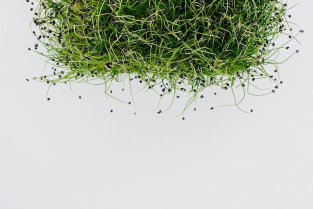 土で鍋に白いテーブルにマイクログリーンタマネギもやし。健康食品とライフスタイル。