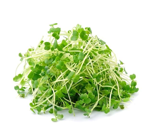 Микро-зеленый салат с рукколой.