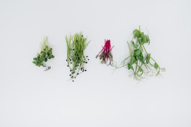 여유 공간이 있는 흰색 배경에 마이크로 녹색 콩나물이 클로즈업됩니다. 건강한 음식과 생활 방식.