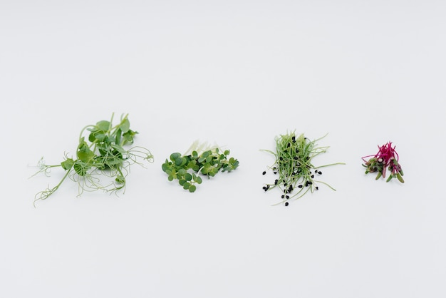 Микро зеленый ростки крупным планом на белом фоне с открытым пространством. здоровая пища и образ жизни.