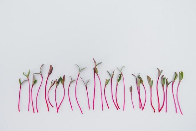 Крупный план микро-зеленые ростки на белой поверхности со свободным пространством. здоровое питание и образ жизни.