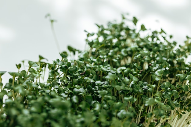 Микро зеленые ростки крупным планом на белом фоне