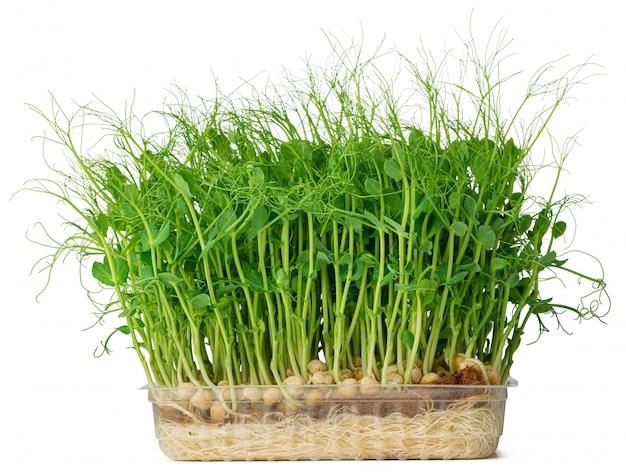 Микро зеленые ростки гороха, изолированные на белом