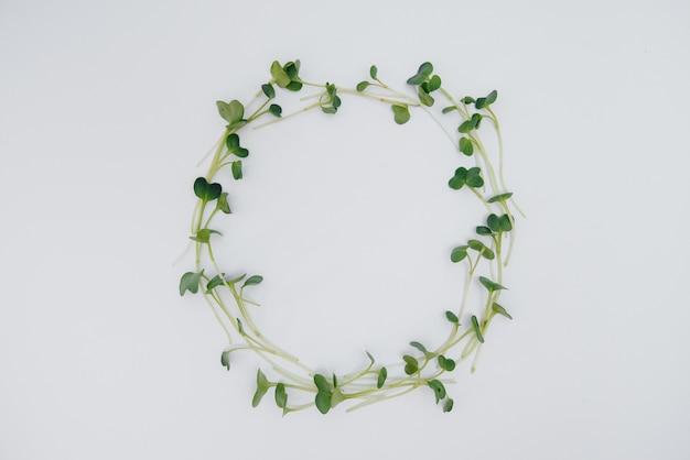 Микро-зеленые ростки на белом столе с открытым пространством.
