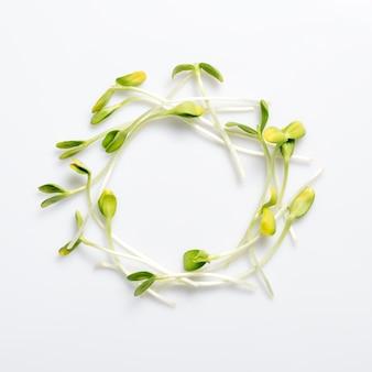 Микро-зелень, расположенная по кругу на белом фоне, ростки подсолнечника, микрозелень, плоская планировка, природа и экологическая концепция здорового питания.