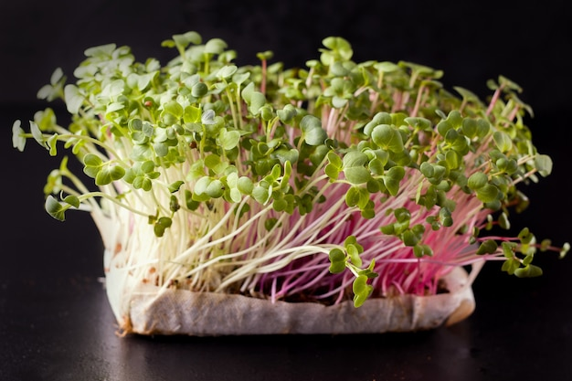 Micro greens on a black background