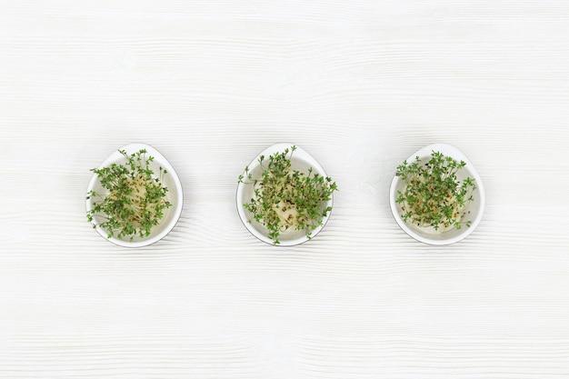 작은 둥근 그릇에서 자라는 마이크로 채소