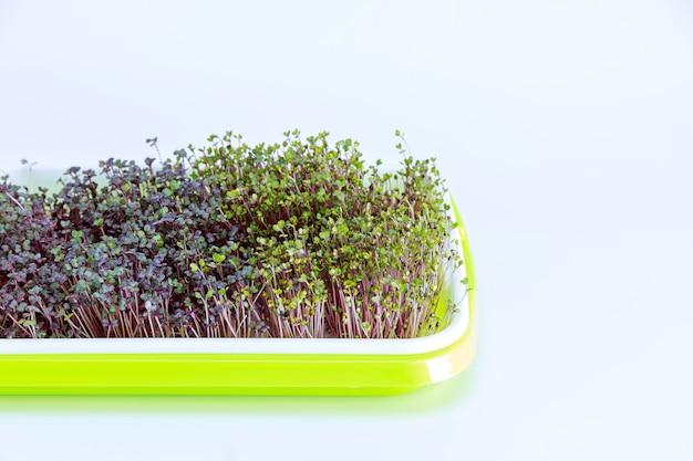 집에서 플라스틱 용기에 담아 자란 밝은 녹색 트레이에 담긴 마이크로 채소. 작은 집 정원