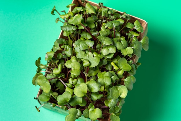 Микро-зелень в лотке для выращивания в картонной коробке. продажа и доставка микро зелени.