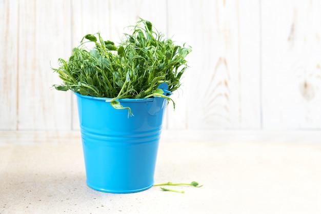 マイクログリーン。雪エンドウ豆もやしをカットして食べる準備ができて