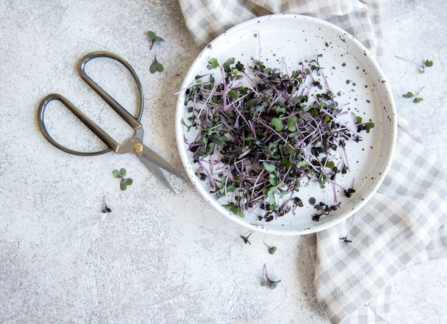 Микро зелень. проросшие семена редиса. проращивание микрозелени. проращивание семян в домашних условиях. концепция веганского и здорового питания.