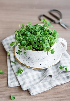 Micro greens sprouted radish seeds  sprouting microgreens seed germination at home