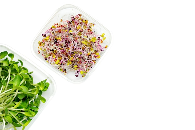 タマネギのマイクログリーンの芽、テキスト用の空きスペースのある白い背景のプラスチック製の保存容器に大根。