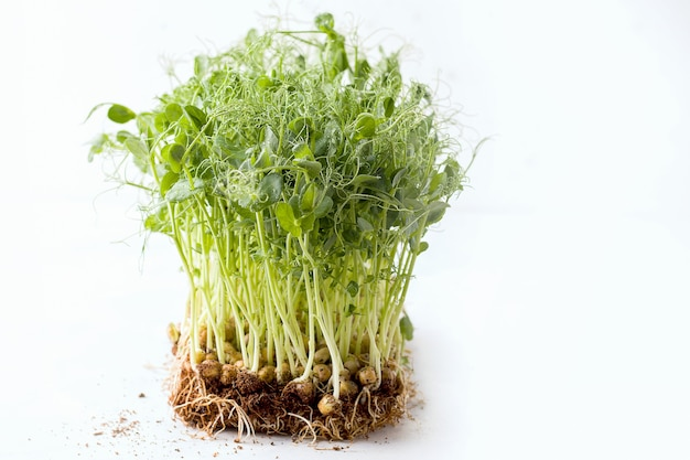 Micro greens on a white background