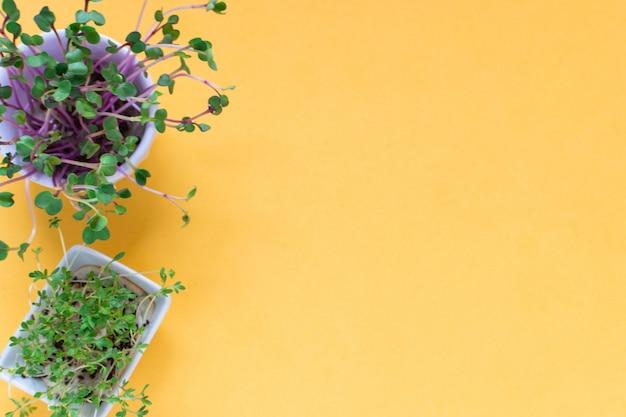 Microgreen кресс, ростки розового редиса на желтом, плоская планировка, вид сверху, copyspace