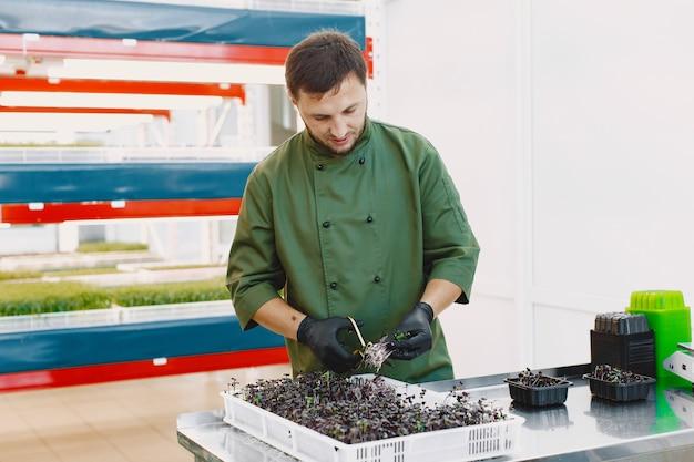 Microgreen 커런덤 고수풀은 남성의 손에 싹이납니다. 생 콩나물, 마이크로 그린, 건강한 식생활 개념. 남자는 가위로 자른다.