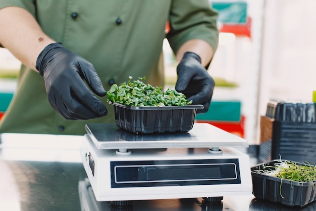 Microgreen 커런덤 고수풀은 남성의 손에 싹이납니다. 생 콩나물, 마이크로 그린, 건강한 식생활 개념. 남자는 상자에 포장합니다.